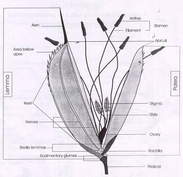 Biologi Bunga Miftachurohman